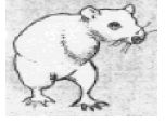 bipedal rat